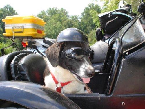 Doggie Bike or Motorcycle Helmet ~ XS White
